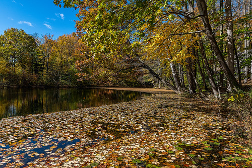 trees color fall leaves landscape pond nikon nikond810 240700mmf28