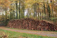 1. November 2015 - 17:07 - Raummeter Holz im Forst