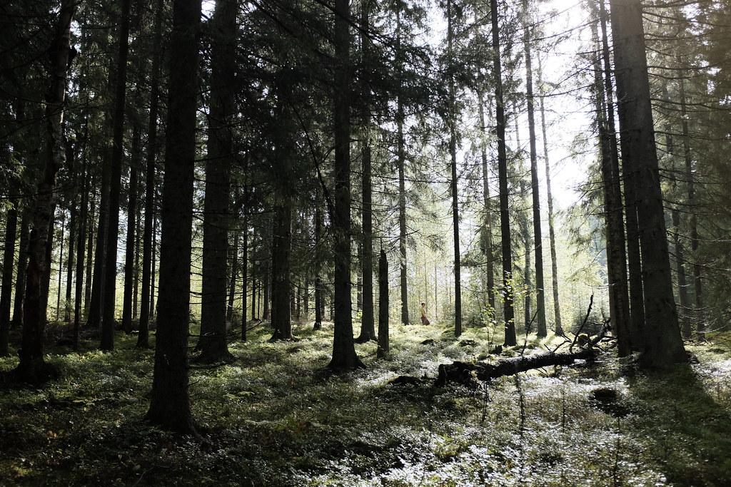 Finland 15