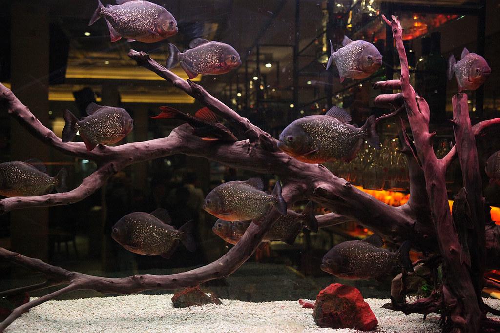 piranha-fish-tank-at-grill-on-the-market