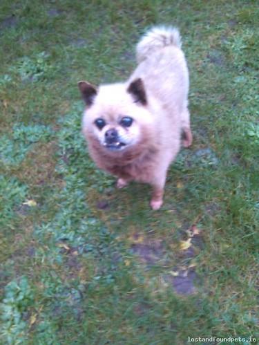 Sun, Nov 29th, 2015 Found Male Dog - R339, Galway
