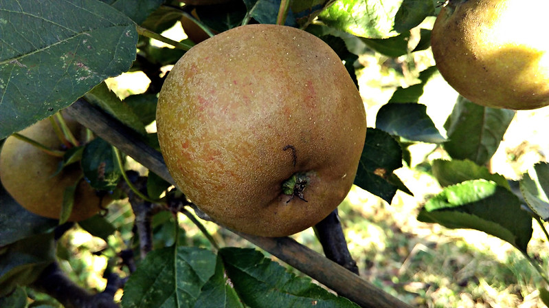 Apple day 2016-apple