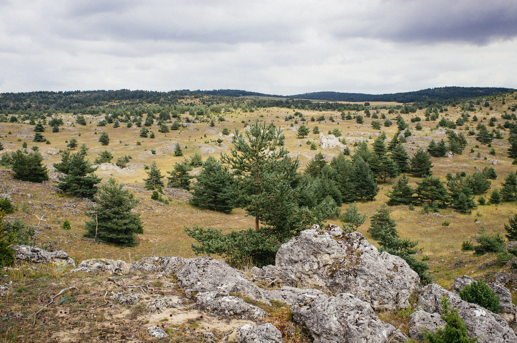 En Lozère, randonnée sous le signe des vautours - Carnet de voyage France
