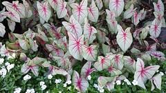 Washington Flowers