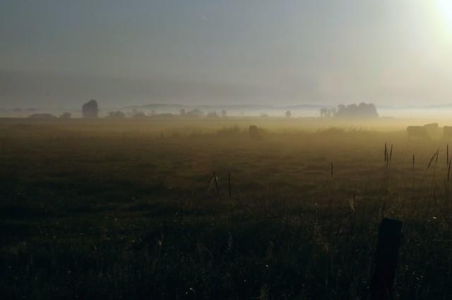 Im Morgen-Nebel - in der Treene-Niederung; Norderstapel, Stapelholm (22a)