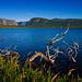 Dead tuckamore, Gros Morne National Park