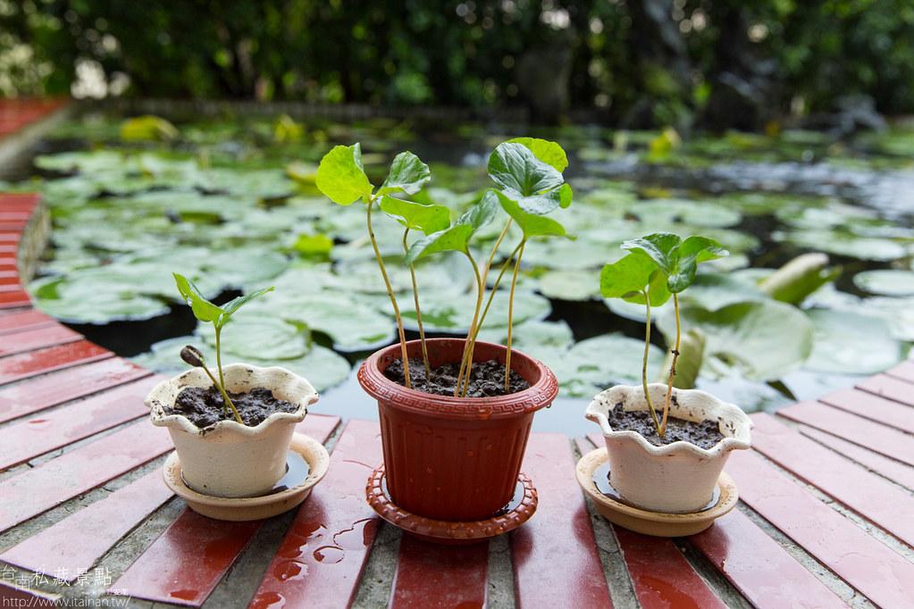 村長庭園咖啡 (12)