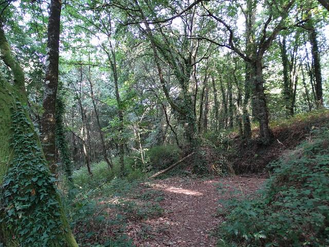 Camino en la Ruta Ornitológica del Bosque Animado