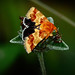 All Decked Out In Autumn Colors~Flower Moth by Brody J