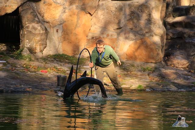 Zoo Berlin 08.11.2015  054