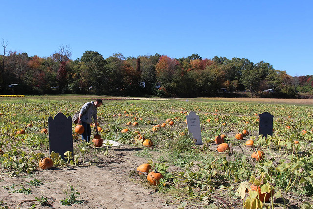 pumpkin patch 2015-11