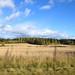 Small photo of Karelia fields