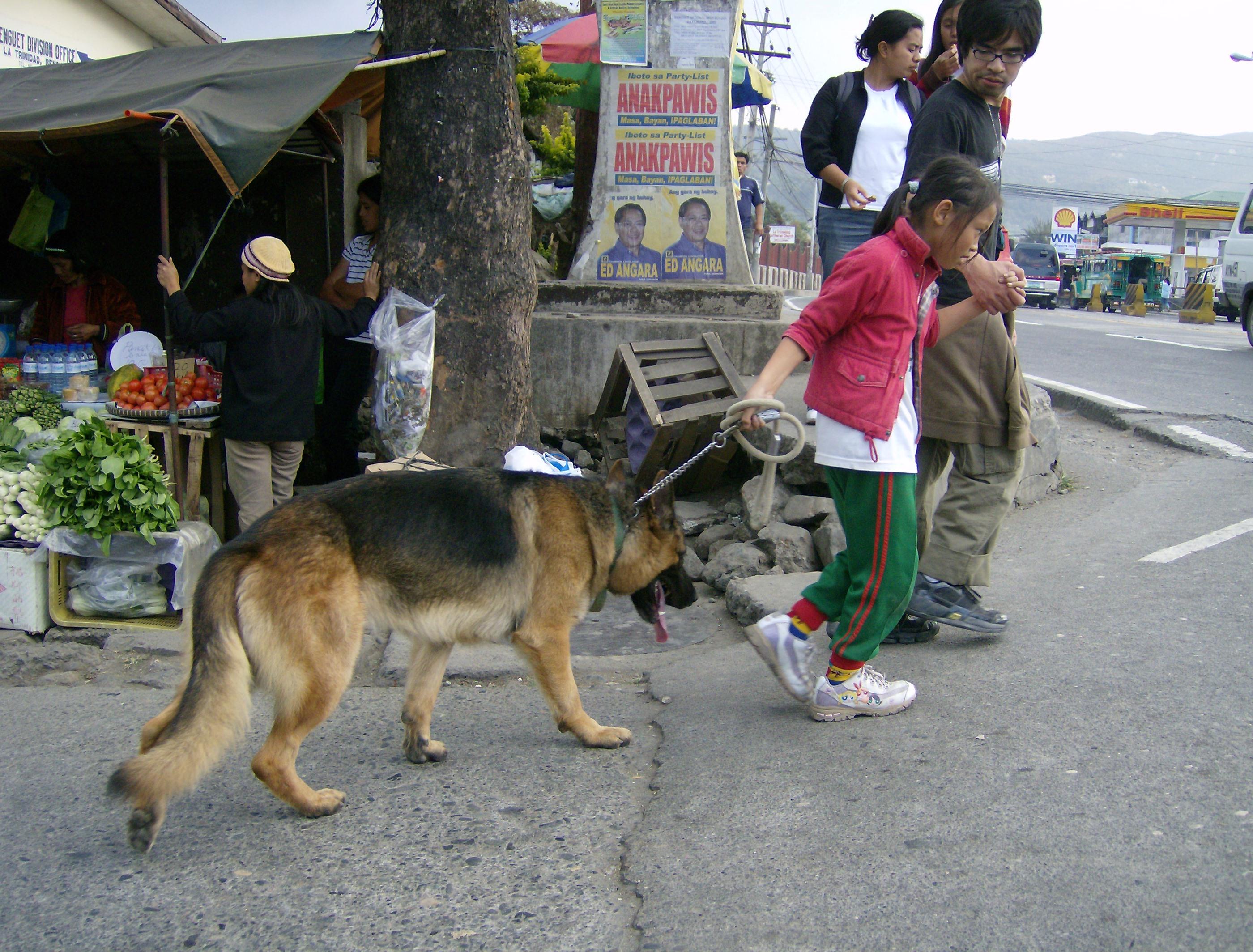 Dogfay