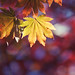 Fall in Time
