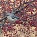 mockingbird-2 by bgblogging