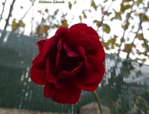 Melbeau Siteweb  Côté jardin (12)