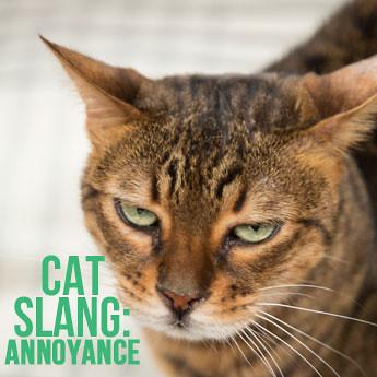 Cats Annoyance