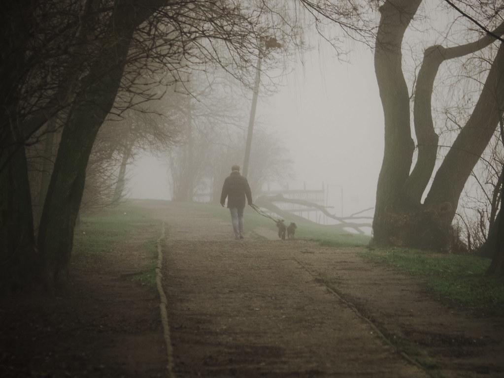 fogg walk