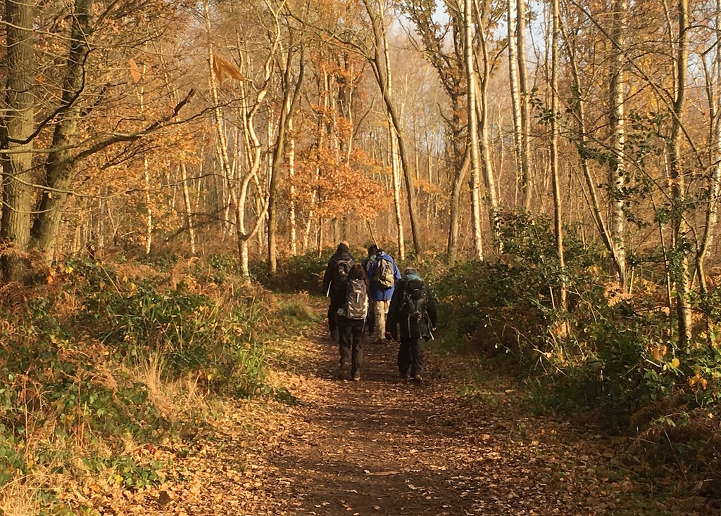 Late autumn colours Oxshott to Ashtead walk