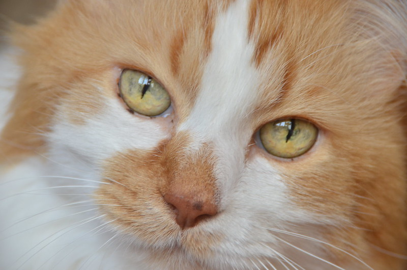 Kitty Portrait Session