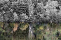 Reflecting-on-Spring-Lake