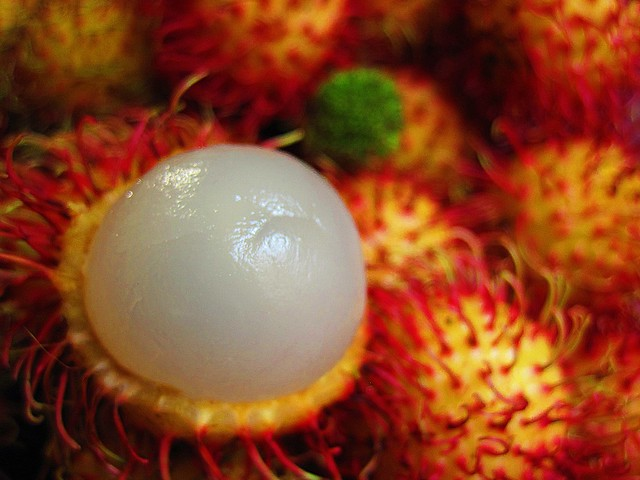 "Rambutan (Nephelium lappaceum) - The name 'rambutan' is derived from the Malay-Indonesian languages word for rambut or ""hair"", a reference to the numerous hairy protuberances of the fruit.  Photography Bernard Eirrol Tugade"