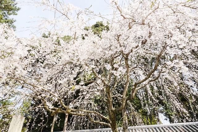0402D8京都醍醐寺-1160250
