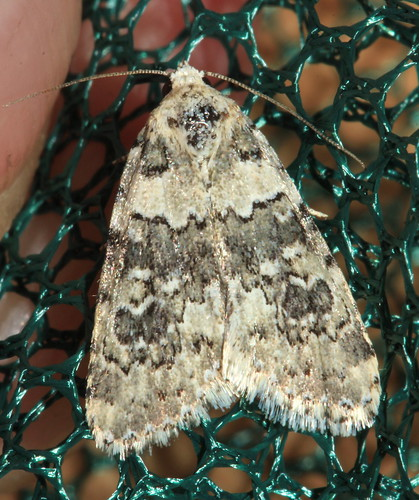 Moth 3490