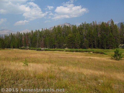 Meadows between the Big Sandy Trail and the Big Sandy River, Wind River Range, Wyoming