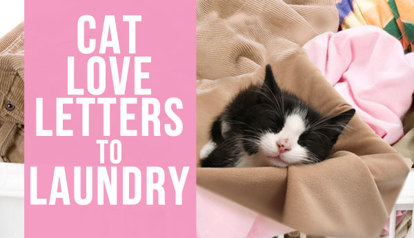 cat-laundry-love-fanglish
