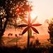 Wind Wheel Sunrise by Bugtris