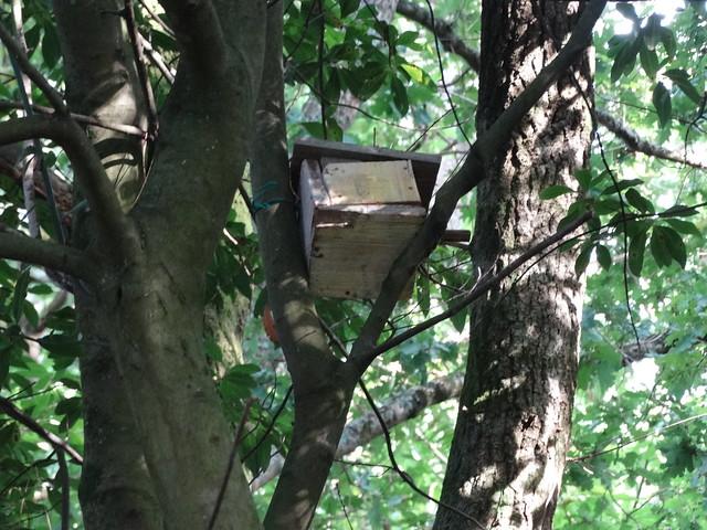 Caseta pájaro en la Ruta Ornitológica del Bosque Animado
