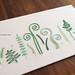 Wild Ferns by Kelly Fletcher Needlework Design