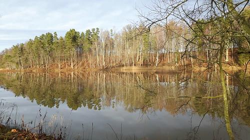 trees winter lake europe baltic latvia latvija 2015 kazdanga dzirnavezers katzdangen