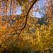 Autumn Hits the Arboretum