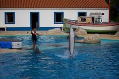 Zoo de Lisboa - Apresentação de Golfinhos e Leões-marinhos