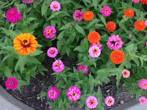 flowers michigan vibrant brightcolors 4summer welcomecenter iphone cmwdorange