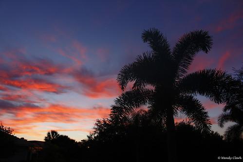sunrise venus