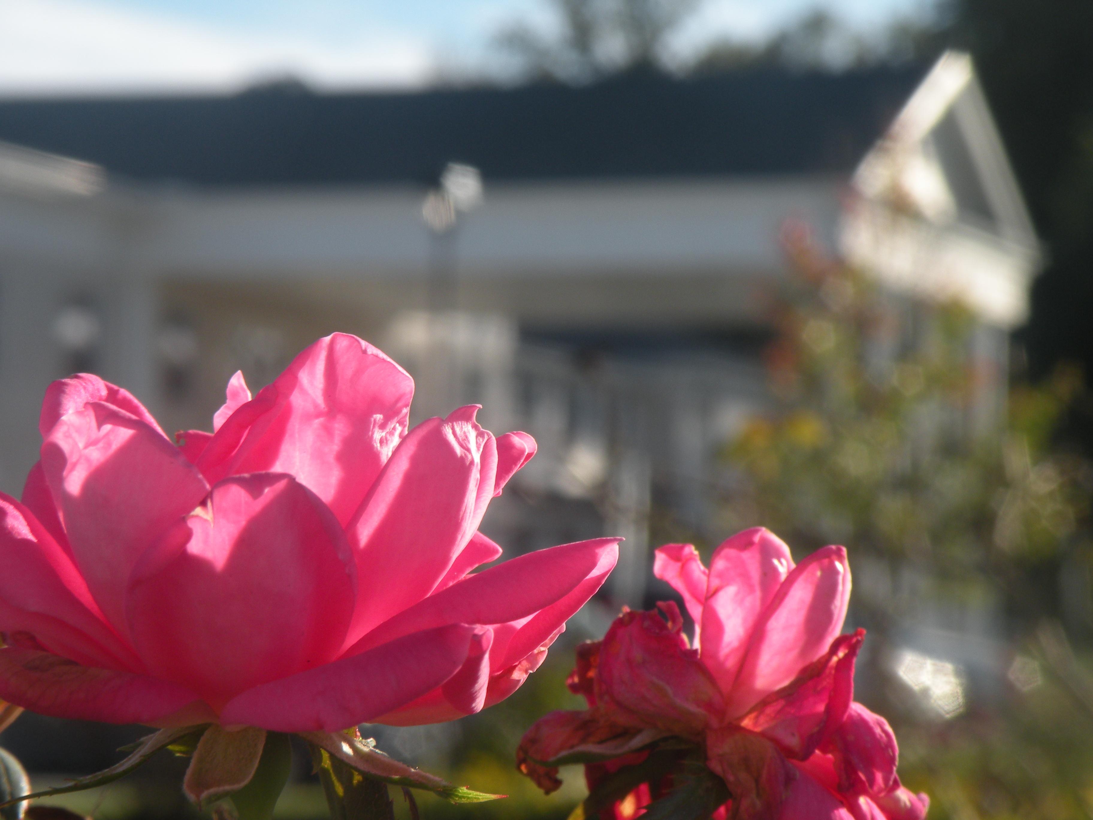 Rose Apartments Jamestown Ny