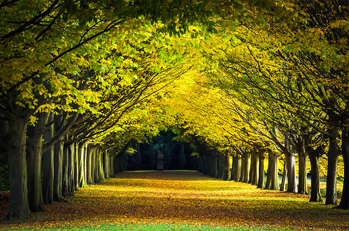 Tree Lined Avenue in Autumn, Anglesey Abbey Landscape Gardens, Cambridge, UK