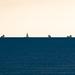 Three ships by paul_clarke