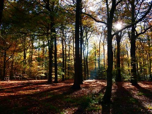 More autumn 4