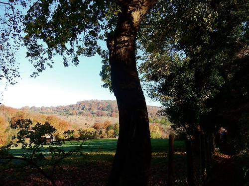 Big tree and hills