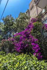 Tel Aviv 056