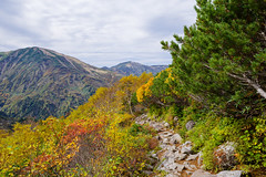 紅葉の岩道