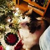 Rediculous cat keeps chewing on the tree...