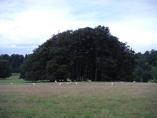 Trees, Fonthill House