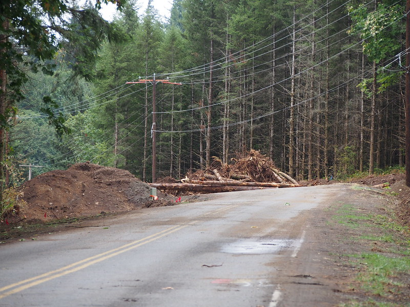 NE Tokul Rd Closure: A downed tree blocked my planned path.