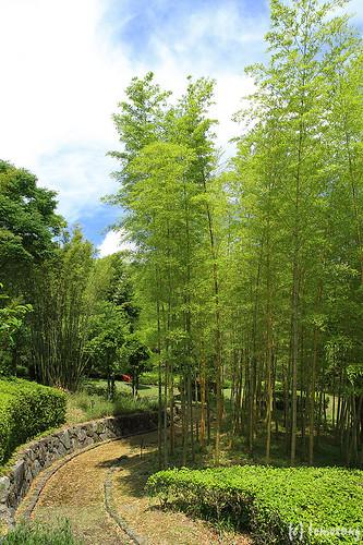 Ouma Bamboo Grove
