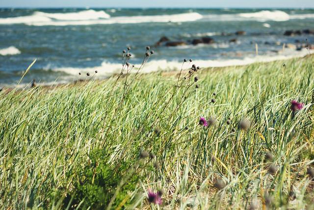 #585 Gotland